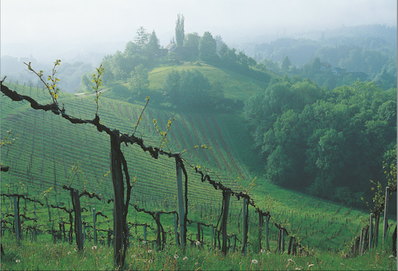 Austrian wine sales grew 30% in 2013