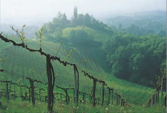 Austrian wine sales grew 30% in 2013