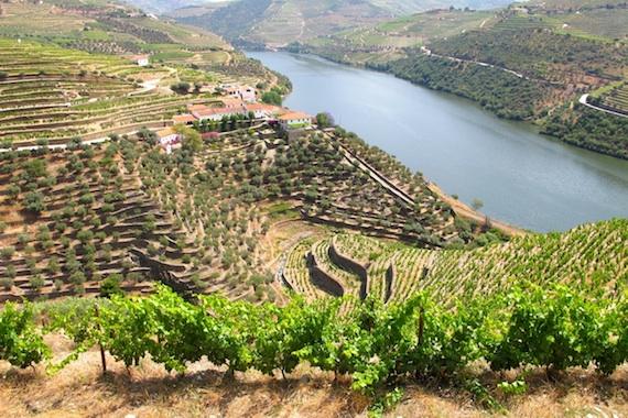 Covela vineyards